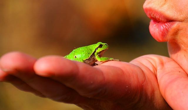 Eat-the-Frog-Methode, Aufgaben, Struktur